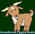 Greenbrook Pygmy Goats